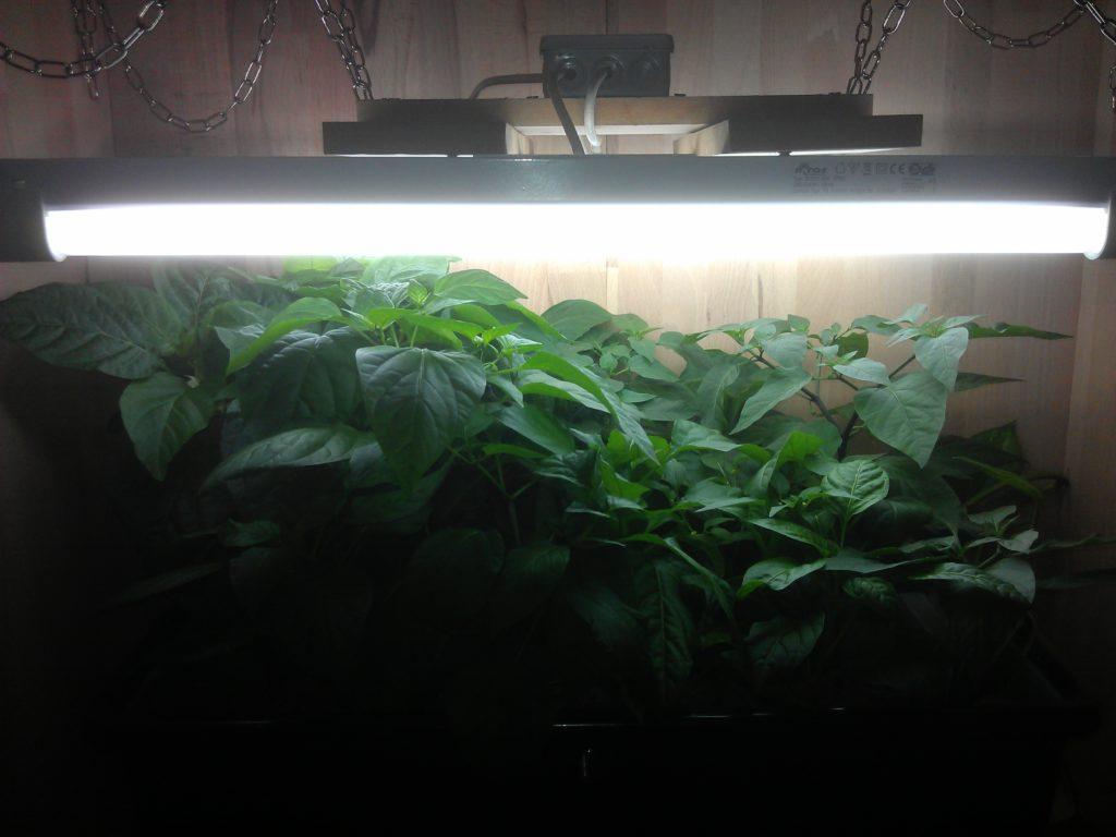 Plant status at 09.03.2013