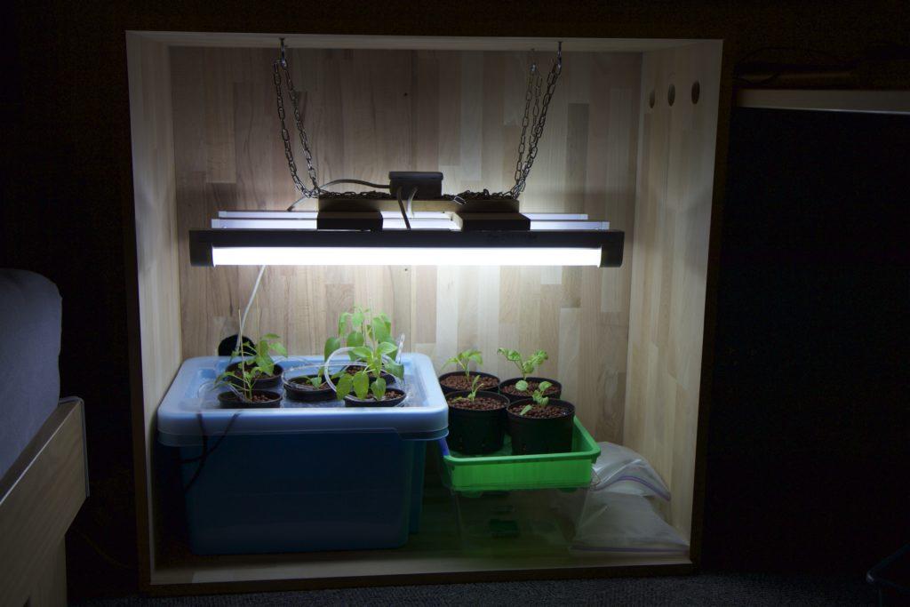 Wooden grow box