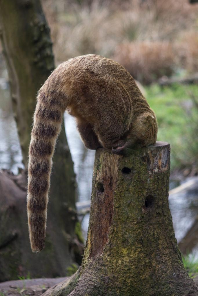 Animal in tree stub